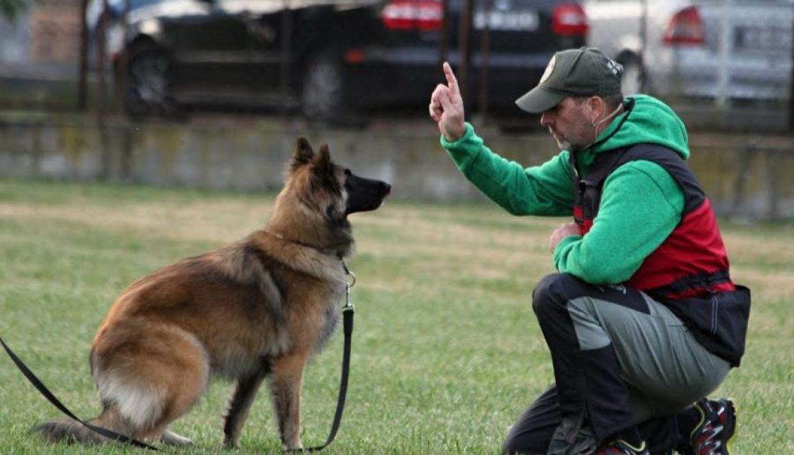 Motywacja i podstawy pracy z psem z Jiřím Ščučką