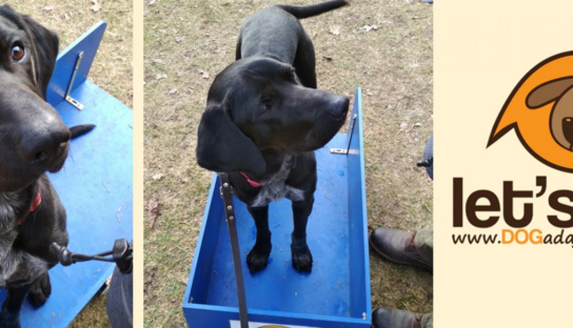 Rika – pies o temperamencie rakiety.