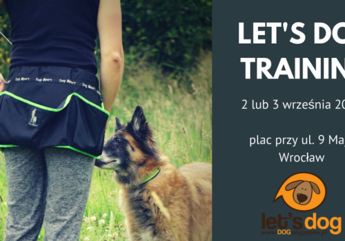 Weekendowy trening z psem – let's dog TRAINING