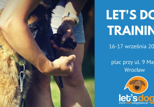 szkolenia psów weekendowy trening z psem