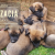 Socjalizacja – czyli jak przygotować psa do życia w świecie ludzi?